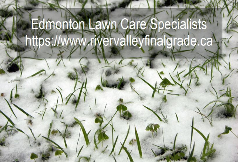 Caring for your Lawn in the winter
