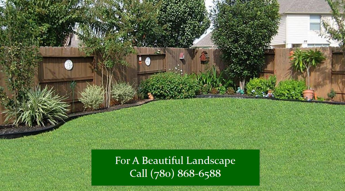 TAKING CARE OF YOUR BACKYARD AND KEEP IT WEED FREE
